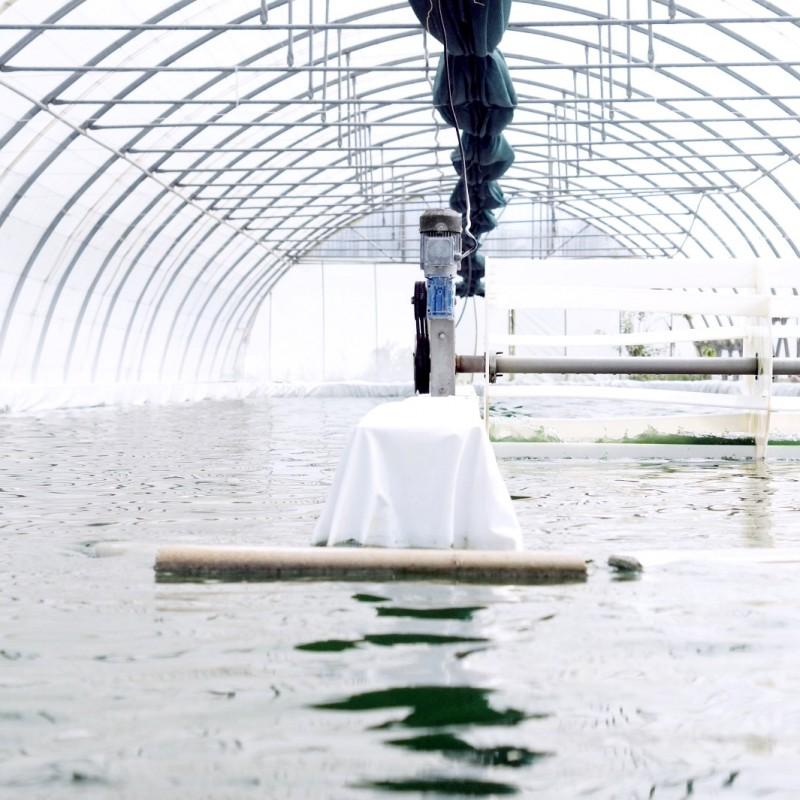 La ferme Solis à la Crau-de-Châteaurenard aux Lonnes. C'est là où nous avons mis en culture nos premiers bassins en 2012.