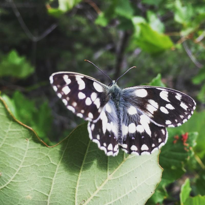 Il y a cette chose fragile qu'il nous faut protéger, #papillon #liberté